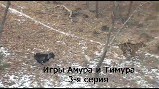 Игры Амура и Тимура. 3-я серия
