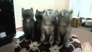 cute cats dancing for tamil song