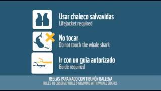 Spot Tiburón Ballena realizado para WWF México