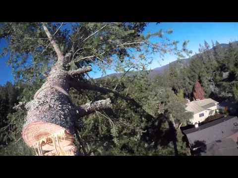 Douglas Fir Tree Removal