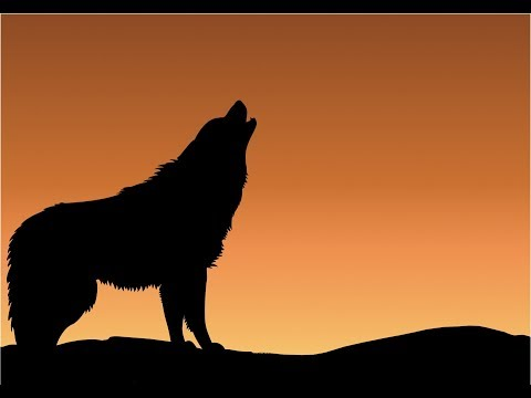 Wolf  Howl Sound Effects All Sounds