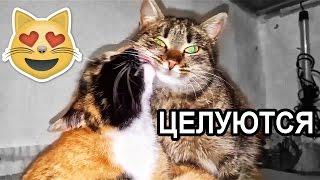 Коты целуются - смешные животные - улетное видео - animals - cats
