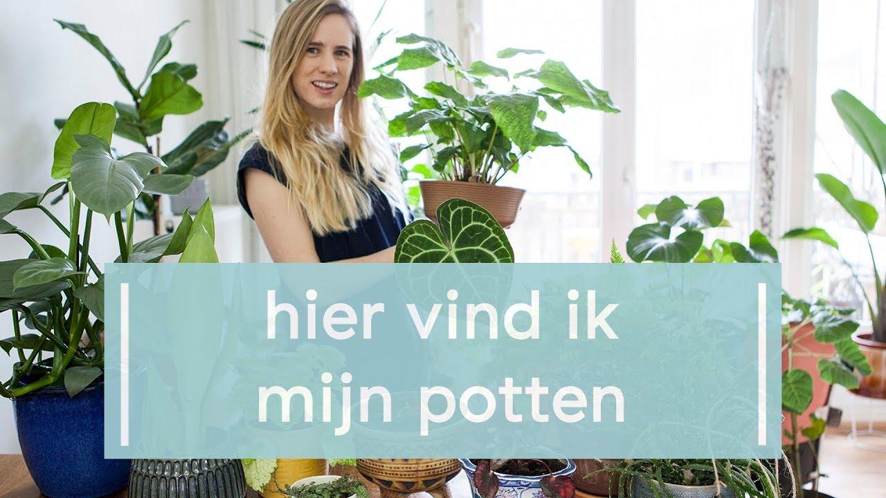 Potten voor je kamerplanten verzamelen  Super Groene