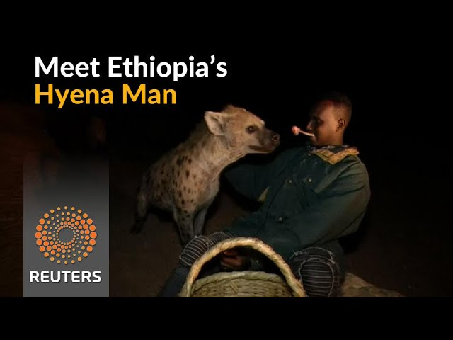 In Ethiopia, feeding hyenas is a tourist attraction
