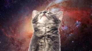 space cats моя версия