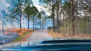 Controlled Wilderness Fire - Prescribed Fire IN FL State Park