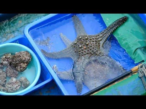 Hong Kong Seafood, Cutting Fish, Cutting Live Starfish Seastar At Sai Kung Seafood Market