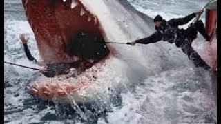 หนังใหม่-2019-the-shark-ฉลามยักษ์อสูรใต้ทะเล-hd-หนังใหม่-2019-พากษ์ไทยเต็มเรื่อง-กดติดตามด้วยนะคะ