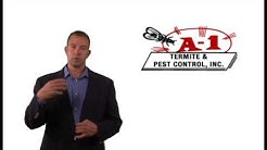 Importance of Yearly Termite Inspections — A1 Termite & Pest Control