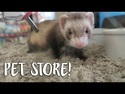 Question: Does PetCo sell ferrets? (2019)