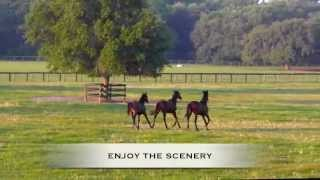 Farms And Ranches For Sale In Ocala Florida with Lana Flodman - NW Ocala for sale