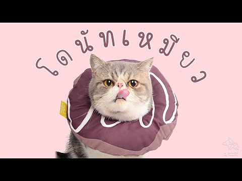 [Review] โดนัทเหมียว คอลล่าน้องแมว