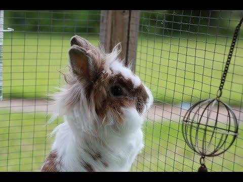 Happy Bunny Rabbit Binky, Hopping, Jumping For Joy - Funny