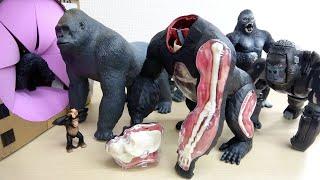 大きめのゴリラのおもちゃがすぽすぽする動画 アニマルビデオ