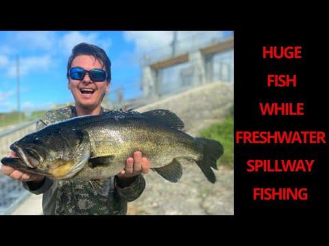 Huge Fish While Freshwater Spillway Fishing *NEW PB*