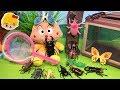 アンパンマン 虫とりにきたよ〜!昆虫採集!カブトムシ、クワガタ、セミ、他に何の虫がいるかな?虫捕りあみとゼリーで捕まえるよ! ❤ 虫カゴ おもちゃ アニメ トイ キッズ anpanman