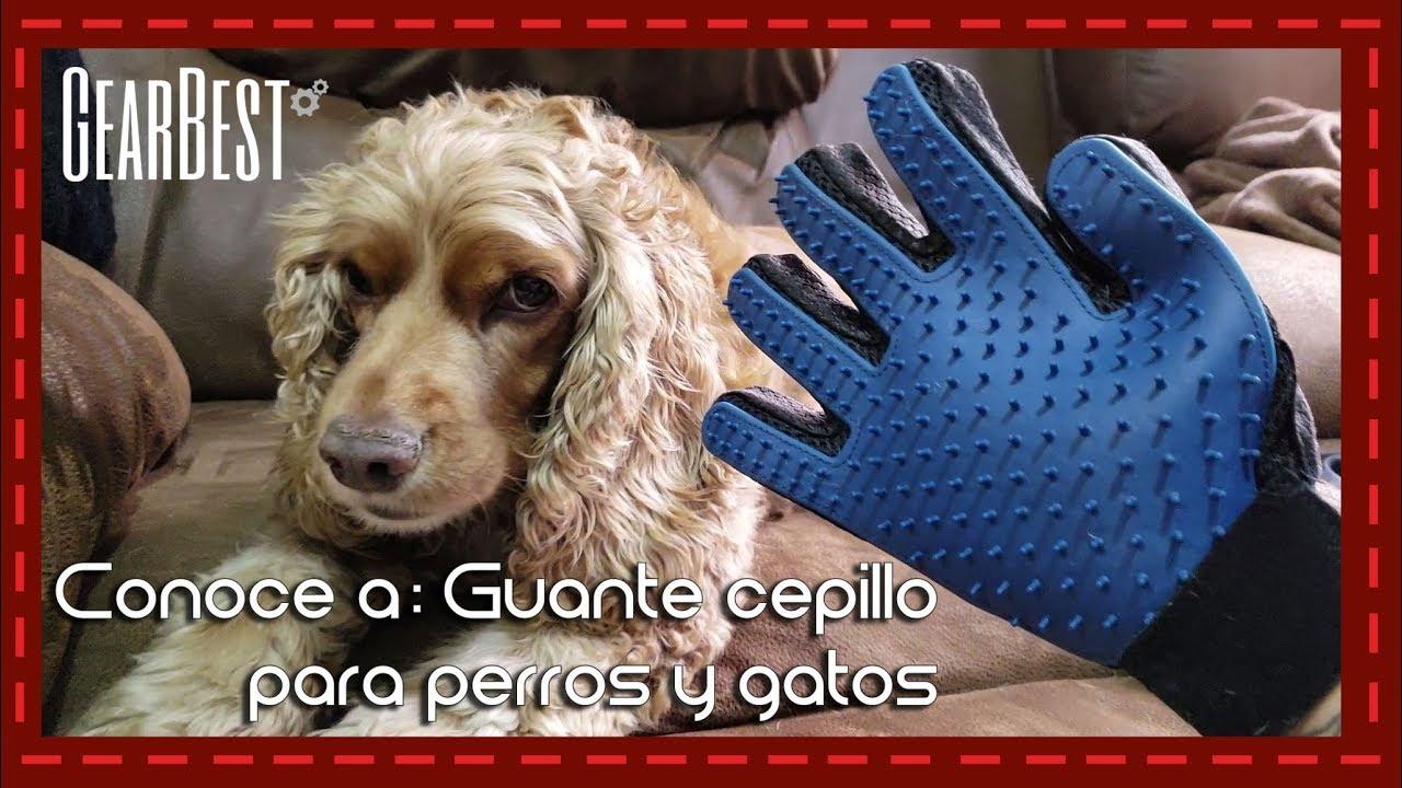 Conoce A Guante Cepillo Para Perros Y Gatos L Gearbest Youtube