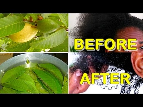 Guava Leaves Water Rinse For Dry Natural Hair + Gelatin & Aloe Vera Protein Treatment ✔️Jah-nette
