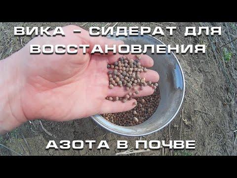 Вопрос: Какие характеристики семян вико-овсяного сидерата?