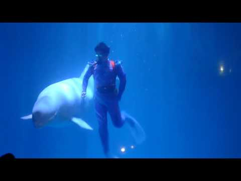 White Whale @ Harbin Polar Land