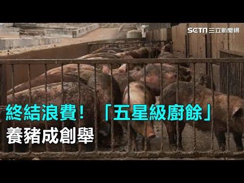 終結浪費!「五星級廚餘」養豬成創舉|三立新聞網SETN.com