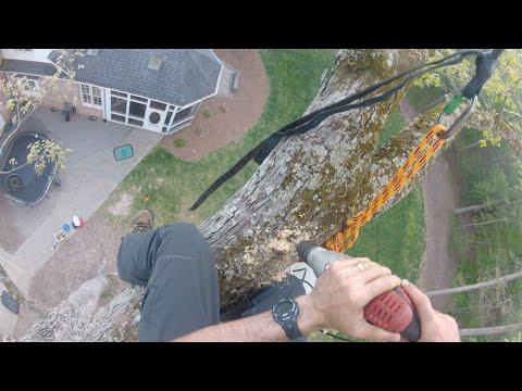 Single Rope Tree Swing Installation by Piedmont Tree Climbing