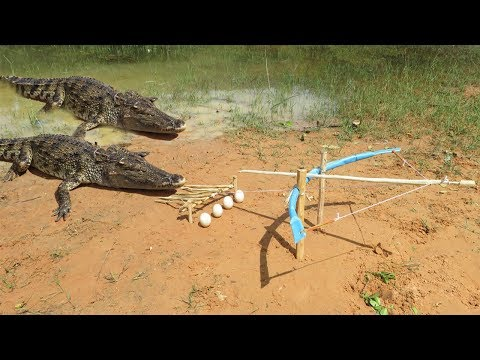 Primitive Technology: Man Make Crocodile Trap - How To Make Big Crocodile Trap Work