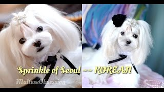 Grooming:  Korean Spicy Seoul For Cosette ~~ Korean Style Cut Groom ~ Asian Cut ~ How To Trim Face