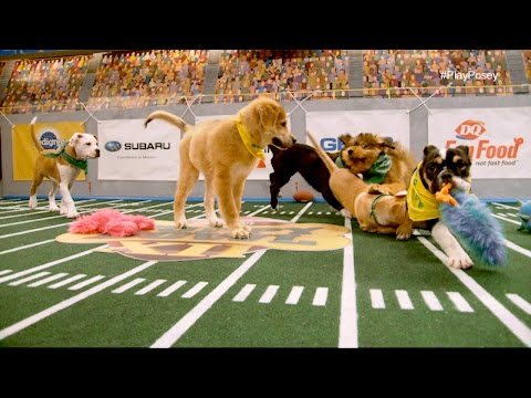 Team Ruff Has Their Wires Crossed | Puppy Bowl Xii