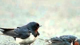 Olivier Messiaen, Abîme des oiseaux, Quatuor pour la fin du temps