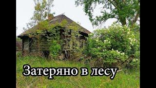 Покинутая деревня в лесах Мордовии. Повсюду волчьи следы. Один посреди леса.