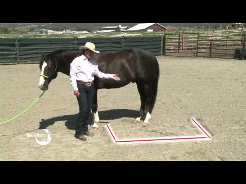 Julie Goodnight: Quick Tip to Stay out of Horse's Kick Zone, CHA