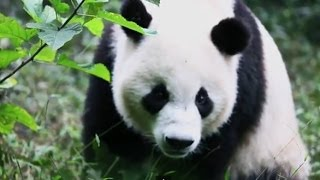 Energy Efficient Stoves to Protect the Giant Panda