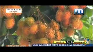 Documentary on Rambutan fruit Farming in Kerala