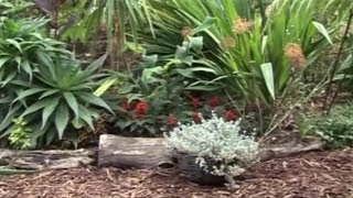 JAK PRZYGOTOWAĆ ROŚLINY PRZED ZIMĄ - Sekrety ogrodów, seria ODC. 5