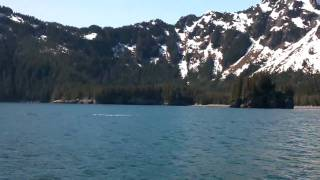Humpback Whales in Kenai Fjords