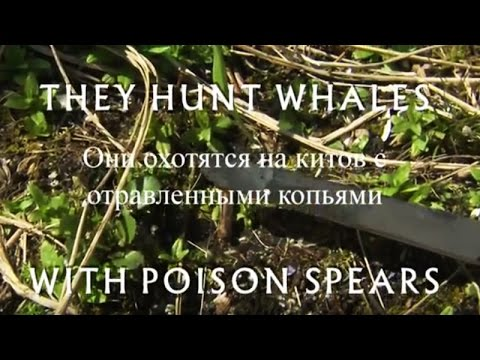 Russian. They Hunt Whales With Poison Spears