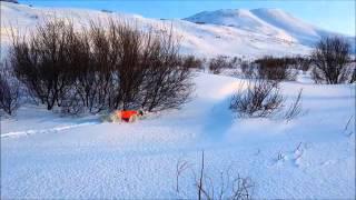 Английский сеттер - Работа по куропатке по снегу