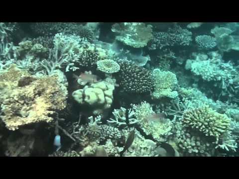 MALDIVES - Under the sea in Centara Grand