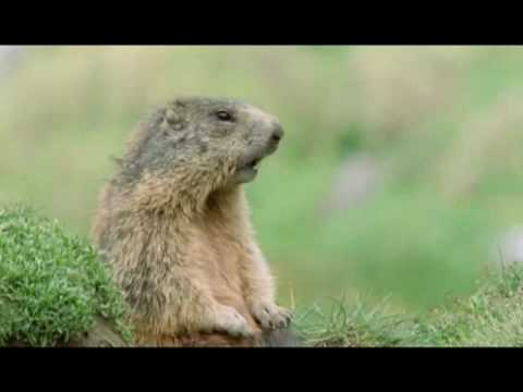 Prairie Dog Steve