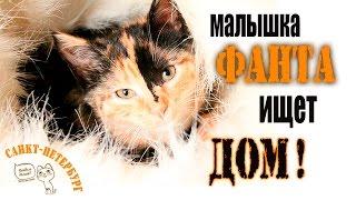 Самый ласковый котёнок Фанта ищет Дом!