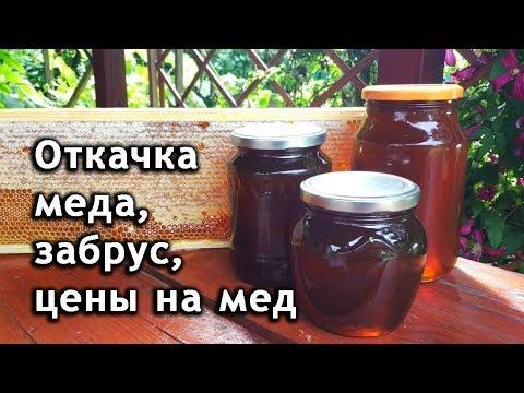 Откачка меда медогонкой. Польза забруса. Цена на мед 2019. Мед из разнотравья.