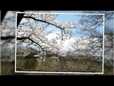 Top 10 Travel Destinations in Osaka Japan