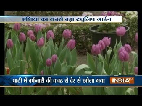Srinagar's Tulip Garden thrown open to visitors