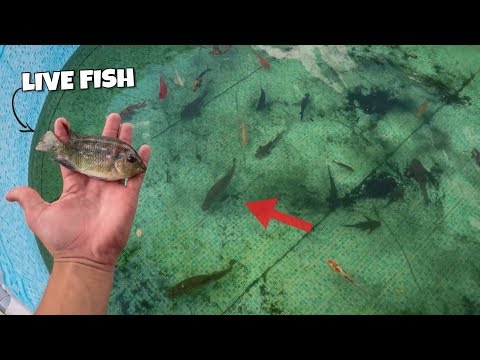 MONSTER FISH FEEDING in OUTDOOR POOL POND!!