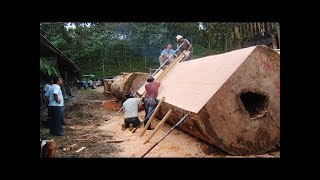 Dangerous Biggest Wood Sawmill Machine Working - Extreme Fastest Chainsaw Cutting Large Tree Easy