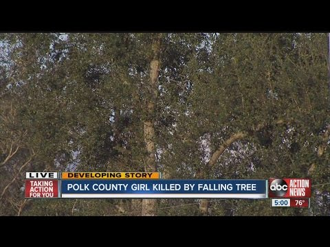 Tree falls on 12-year-old girl, kills her