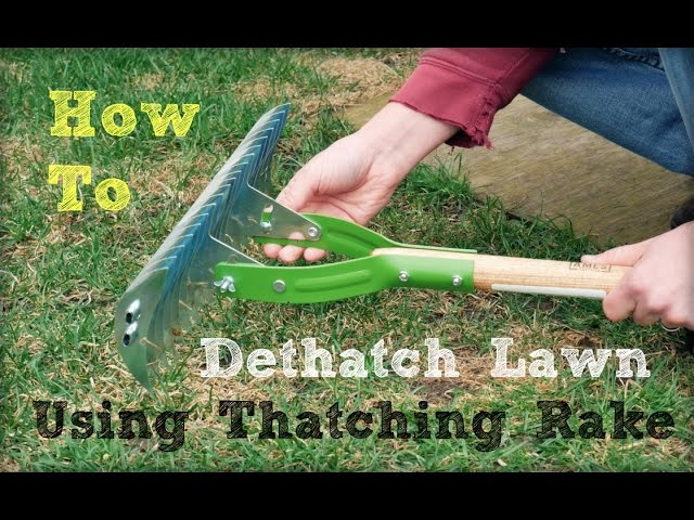 How To Dethatch Lawn Using A Thatching Rake Youtube