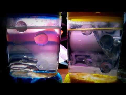 Sea monkeys versus brine shrimp