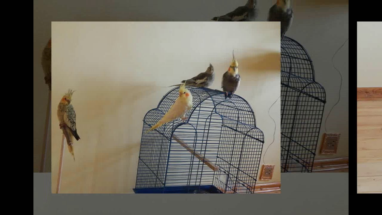 Slide Show Of Some Of My Bird Photos >> My Birds Slide Show My Birds Story Youtube